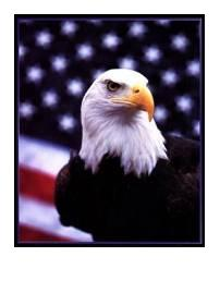 eagle in front of flag